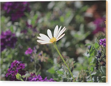 Single White Daisy On Purple Wood Print by Colleen Cornelius