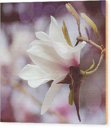 Single White Magnolia Wood Print by Jordan Blackstone