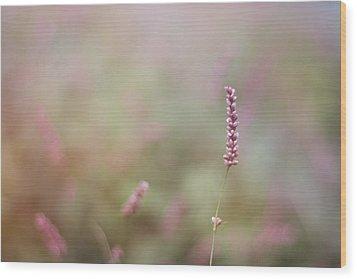 Single Wild Flower Wood Print