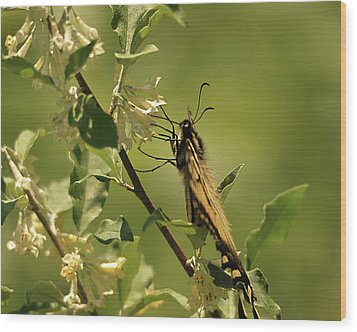 Wood Print featuring the photograph Sipping In The Shade by Susan Capuano