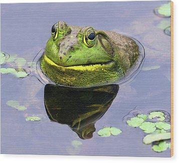 Sir Bull Frog Wood Print