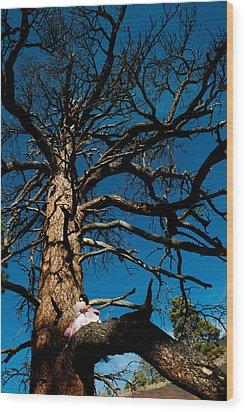 Sitting In Tree 2 Wood Print by Scott Sawyer
