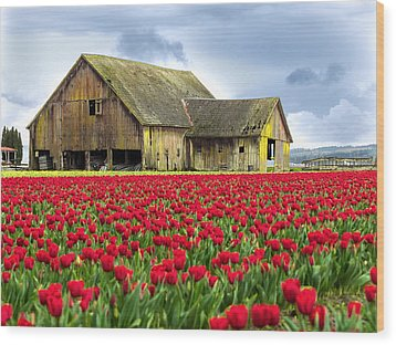 Skagit Valley Barn Wood Print