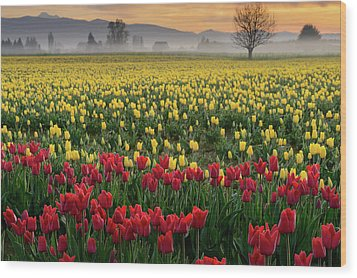 Wood Print featuring the photograph Skagit Valley Misty Morning by Dan Mihai