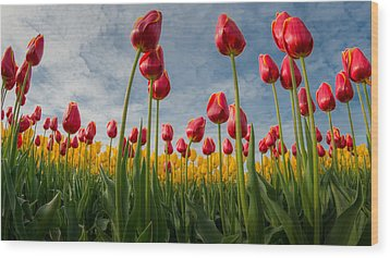 Wood Print featuring the photograph Skagit Valley Spring Joy by Dan Mihai