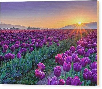 Skagit Valley Sunrise Wood Print