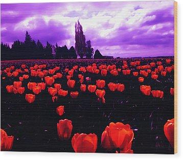 Skagit Valley Tulips Wood Print by Eddie Eastwood