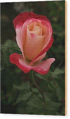 Skc 0435 Nature's Color Shading Wood Print by Sunil Kapadia