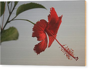 Skc 0450 Vibrant Hibiscus Wood Print