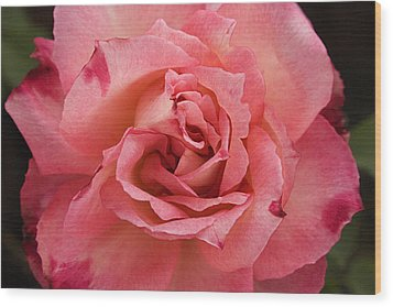 Skc 4942 The Pink Harmony Wood Print