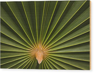 Skc 9959 The Palm Spread Wood Print by Sunil Kapadia
