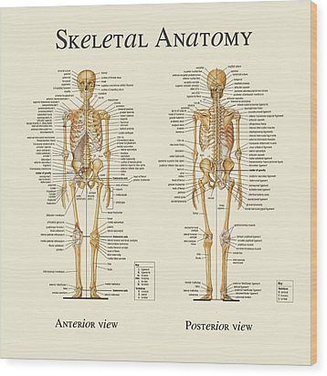 Wood Print featuring the digital art Skeletal Anatomy by Gina Dsgn