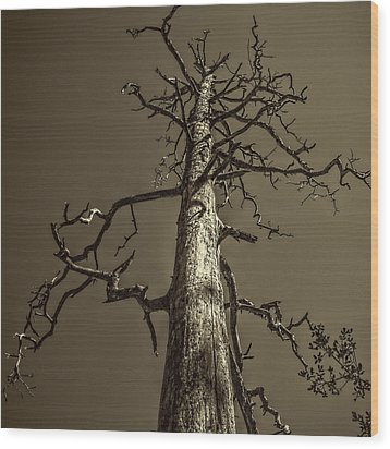 Skeletal Tree Sedona Arizona Wood Print