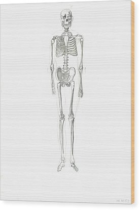 Skeleton Wood Print by Joseph  Arico
