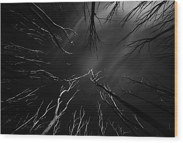 Skeleton Trees Wood Print by Mihai Florea
