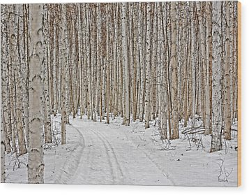Ski Trail Wood Print