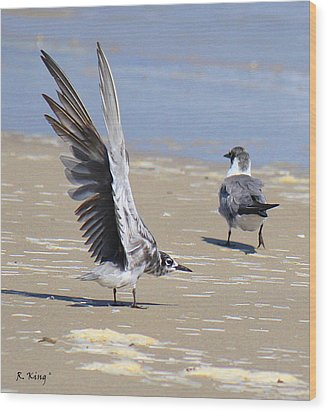 Skiddish Black Tern Wood Print