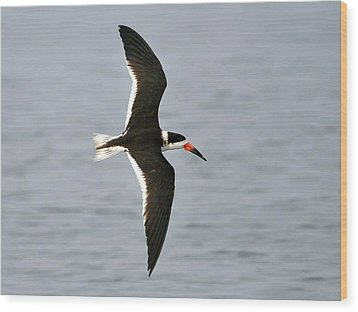 Skimmer In Flight Wood Print by Al Powell Photography USA