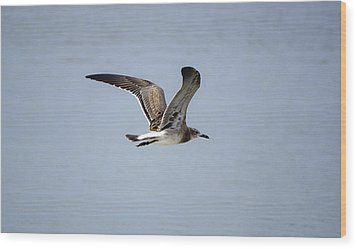 Skimming Seagull Wood Print