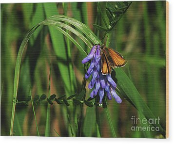 Skipper Butterfly Wood Print by Deborah Johnson