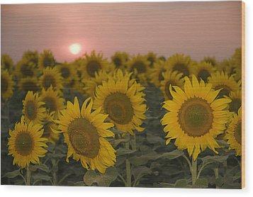 Skn 2178 The Sunflowers At Sunset  Wood Print by Sunil Kapadia