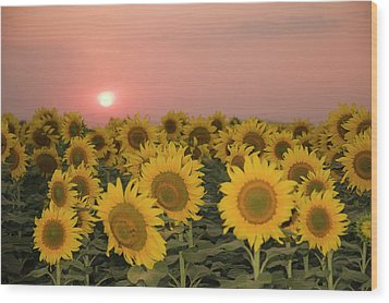 Skn 2179 Sunflower Landscape Wood Print