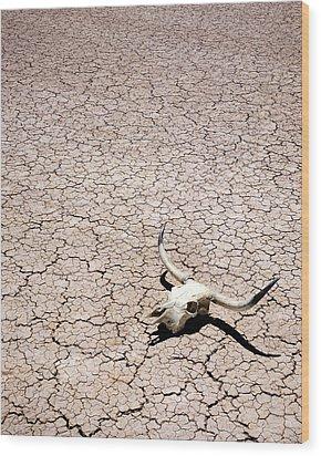 Skull In Desert Wood Print by Kelley King