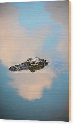 Sky Gator Wood Print by Josy Cue