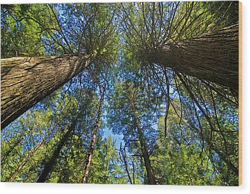 Wood Print featuring the photograph Skyward by Gary Lengyel