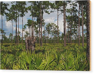 Slash Pine And Saw Palmetto Wood Print by Steven Scott