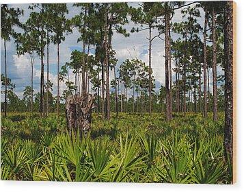 Slash Pine And Saw Palmetto Wood Print by Steven Scott
