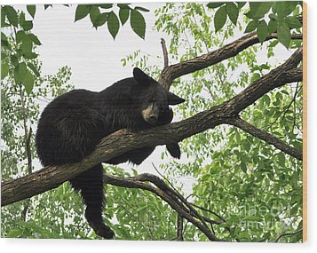 Sleeping Bear Wood Print by Whispering Feather Gallery
