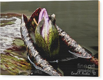 Sleeping Beauty In Water Lily Pond Wood Print by Carol F Austin