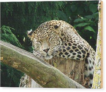 Sleeping Leopard Wood Print by Nicola Butt
