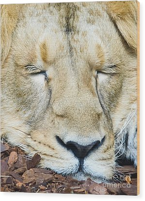 Sleeping Lion Wood Print by Colin Rayner