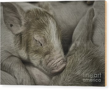 Sleeping Piglet Wood Print