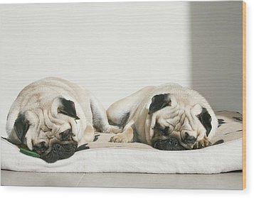 Sleeping Pug Dogs Wood Print by Elli Luca