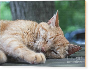 Sleeping Salem Wood Print by Wendy Coulson