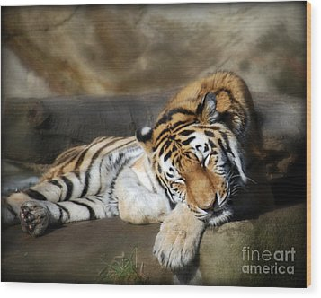 Sleeping Tiger  Wood Print by Lila Fisher-Wenzel