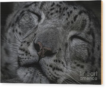 Sleepy Cat Wood Print