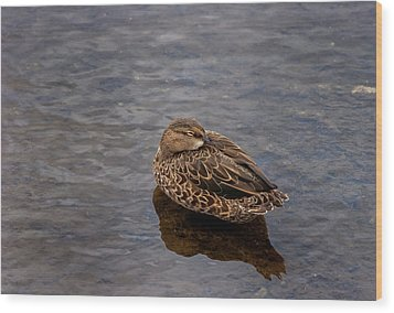 Wood Print featuring the photograph Sleepy Duck by Arthur Dodd