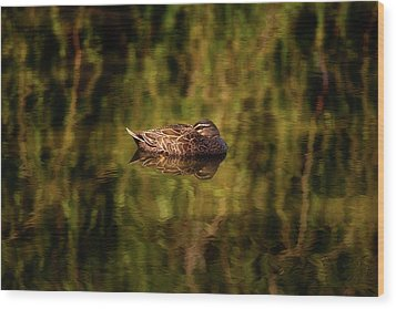 Wood Print featuring the photograph Sleepy Duck, Yanchep National Park by Dave Catley