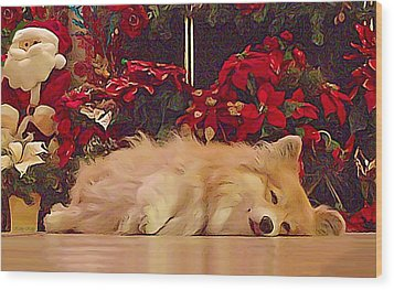 Wood Print featuring the photograph Sleepy Holiday Corgi Surrounded By Poinsettias. by Kathy Kelly