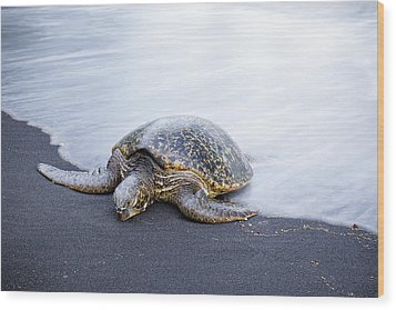 Sleepy Honu Wood Print