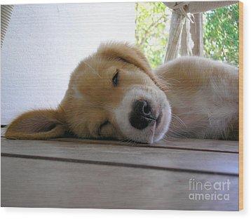 Sleepy Jojo Wood Print by Barbara Marcus