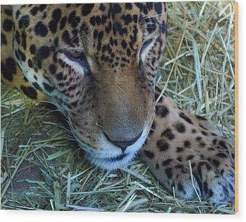 Sleepy Leopard Wood Print