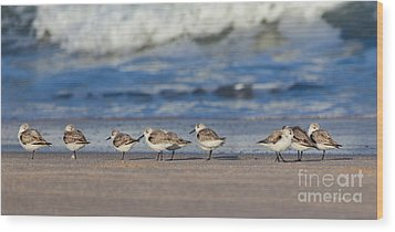 Wood Print featuring the photograph Sleepy Shorebirds by Michelle Wiarda