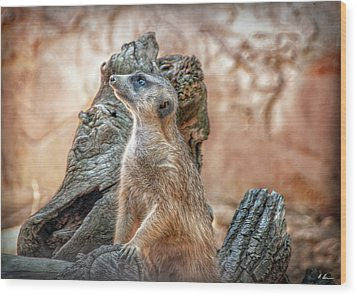 Wood Print featuring the photograph Slender-tailed Meerkat by Hanny Heim