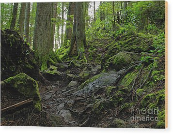 Wood Print featuring the photograph Slippery When Wet by Sharon Talson
