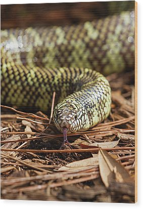 Wood Print featuring the photograph Slither Snake by Arthur Dodd
